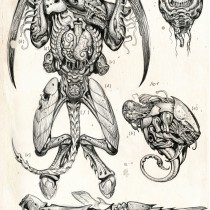 Tyranid dissection